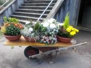Blumen-Karrette