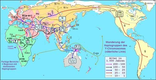 Y-Haplogruppen-Wanderung